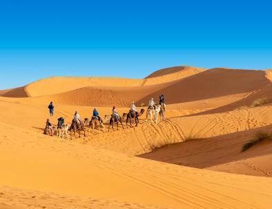 Camel trekking in the Sahara desert of Morocco, will do it in our 4 days desert tour from Marrakech to Merzouga