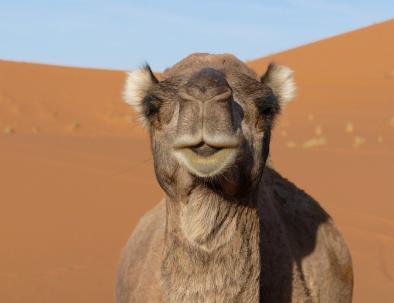 Agadir desert tour, 4 days to the Sahara of Merzouga